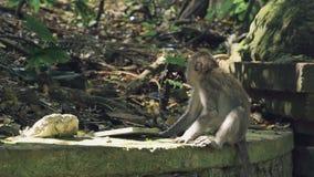Mały małpi obsiadanie na kamiennej ścianie zbiory