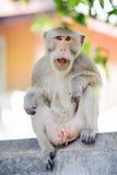 Mały małpi patrzeć dla coś 2 Obrazy Royalty Free