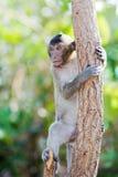 Mały małpi patrzeć dla coś 6 Obraz Stock