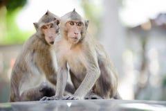 Mały małpi patrzeć dla coś 7 Fotografia Royalty Free