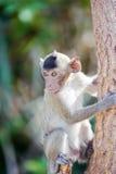 Mały małpi patrzeć dla coś 8 Zdjęcia Royalty Free