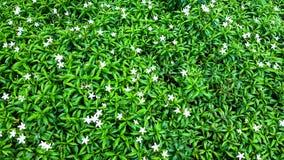 Mały Malutki Mały kwiat Zdjęcia Stock