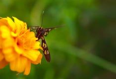 Mały motyl na kwiacie chwytającym w makro- obrazy stock