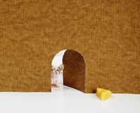 Mały myszy przybycie z go jest dziurą Zdjęcie Stock