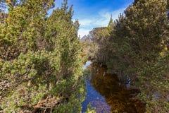 Mały naturalny strumień woda wymieniał gołąbki rzekę, kanał gołąbka Obrazy Stock