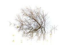 Mały Nieżywy drzewo W wodzie fotografia royalty free