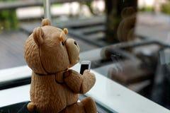 Mały niedźwiedź jest przyglądający zdjęcie royalty free
