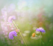 Mały niezwykły purpura kwiat Fotografia Royalty Free