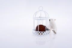 Mały notatnik umieszczający w ptasim domu z barami Fotografia Royalty Free