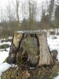 Mały odpoczynek drzewo fotografia royalty free