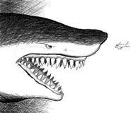 mały okładzinowy rybi rekin ilustracja wektor