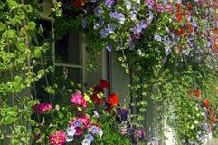 Mały okno obramiający z barwionymi okwitnięciami zdjęcia stock