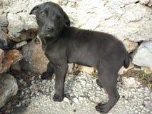 Mały osamotniony czarny pies fotografia stock