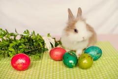 Mały owłosiony królik z Wielkanocnymi jajkami na zielonym tle 2 forsują pisklęca pojęcia Easter jajek kwiatów trawa malujących um obraz royalty free