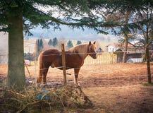 Mały padok w wiosce z jeden koniem fotografia stock