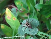 mały pajączku Zdjęcia Stock