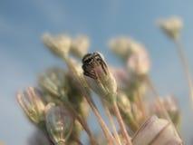 mały pająk Obrazy Stock