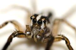 Mały pająk Fotografia Stock