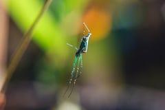 mały pająk Zdjęcie Stock