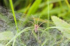 Mały pająk na krawędzi pajęczyna w trawie zdjęcia stock