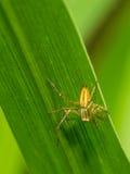 Mały pająk na trawie Zdjęcia Royalty Free