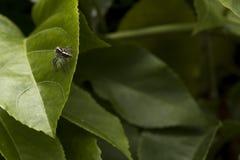 Mały pająk na zielonym urlopie fotografia stock