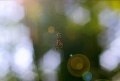 Mały pająk wręcza w spiderweb Na tła kędzierzawym zielonym bokeh fotografia royalty free