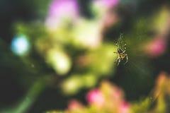 Mały pająka webbing Zdjęcie Stock