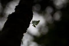 Mały paprociowy liść Zdjęcia Royalty Free