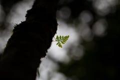 Mały paprociowy liść na ciemnym drzewie Zdjęcia Royalty Free