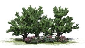 Mały park z krzakami i drzewami na białym tle Obrazy Stock