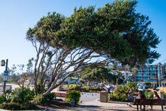 Mały park z młodym pary obsiadaniem na ławce pod przechylającym drzewem obrazy royalty free