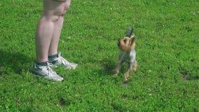 Mały pies biega wokoło cieków mistrz zbiory