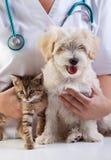 Mały pies i kot przy weterynaryjnym fotografia royalty free