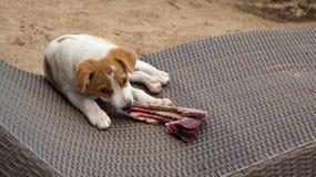Mały pies siedzi na sunchair je blaszkę Fotografia Royalty Free