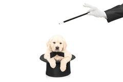 Mały pies w odgórnym kapeluszu i ręce z magiczną różdżką Obrazy Royalty Free