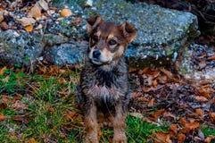 Mały pies w parku obraz stock