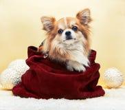 Mały pies w torbie obraz stock