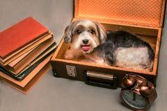 Mały pies zbiera walizka dom obraz stock
