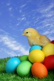 mały pisklęcy Easter obrazy royalty free