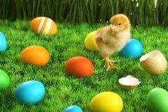 mały pisklęcy Easter zdjęcia stock