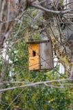 Mały pomarańcze gniazdeczko dla ptaków zdjęcia stock