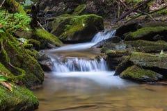 Mały pstrągowy strumień w Appalachian górach Obraz Royalty Free