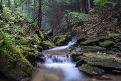 Mały pstrągowy strumień w Appalachian górach Obraz Stock