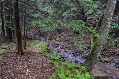 Mały pstrągowy strumień w Appalachian górach Zdjęcia Stock