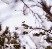 Mały ptak fotografia royalty free