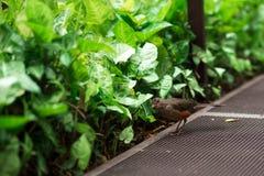 Mały ptak blisko rośliien obraz stock