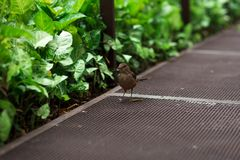 Mały ptak blisko rośliien Fotografia Stock