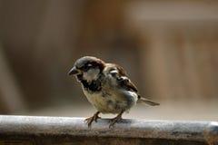 Mały ptak i krzesło zdjęcia stock
