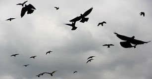 MAŁY ptak LATAŁ Z POWROTEM gniazdeczko PRZY półmrokiem Fotografia Stock